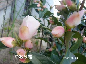f0057006_1544951.jpg