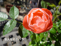 f0057006_1553484.jpg