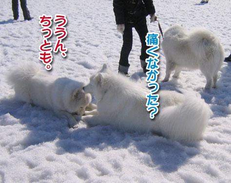桃ちゃん、ピーンチッ!_a0044521_2127511.jpg