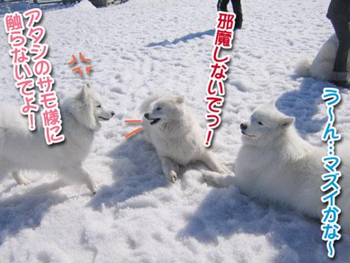 桃ちゃん、ピーンチッ!_a0044521_2128580.jpg