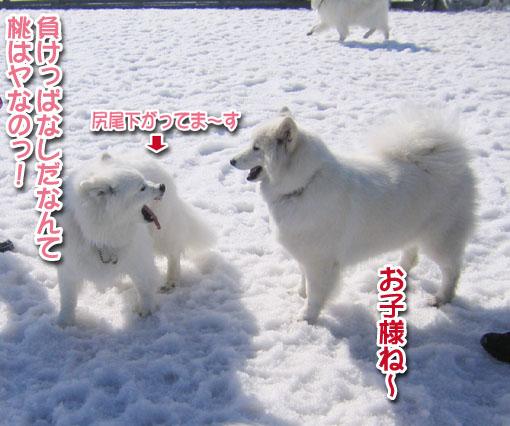 桃ちゃん、ピーンチッ!_a0044521_21303148.jpg