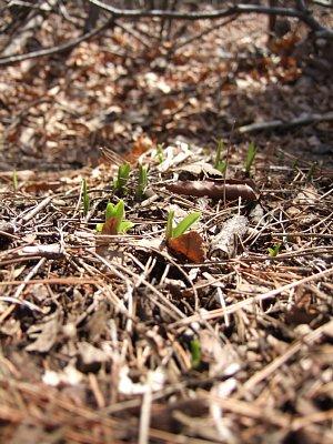春の息吹。_a0016346_2031682.jpg