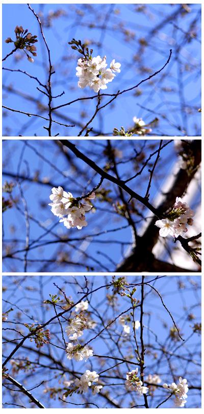 あ、咲いてる_a0003650_2125536.jpg