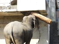 広い広い!多摩動物公園~象~_c0060651_2252434.jpg