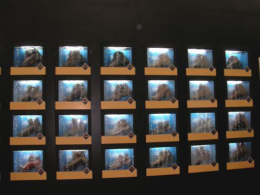 上海の展示会_f0053060_23413615.jpg