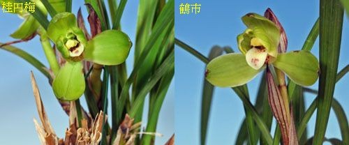 ◆「桂円梅」と「鶴市」                  (No.61)_b0034163_18572986.jpg
