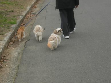 お散歩_c0011501_22145587.jpg