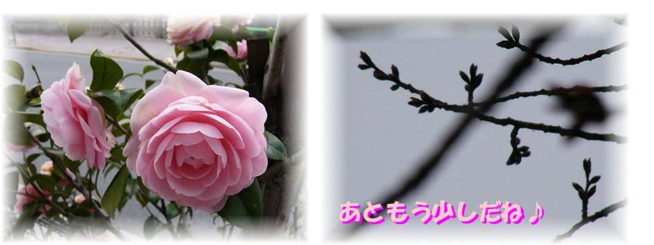 f0039907_22412590.jpg