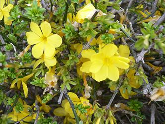 黄色の春_c0069048_650276.jpg