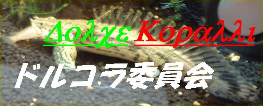 ♪ Dolce Koralli ~ みんなのドルコラ ~ 熱帯魚飼育ブログ2 ♪