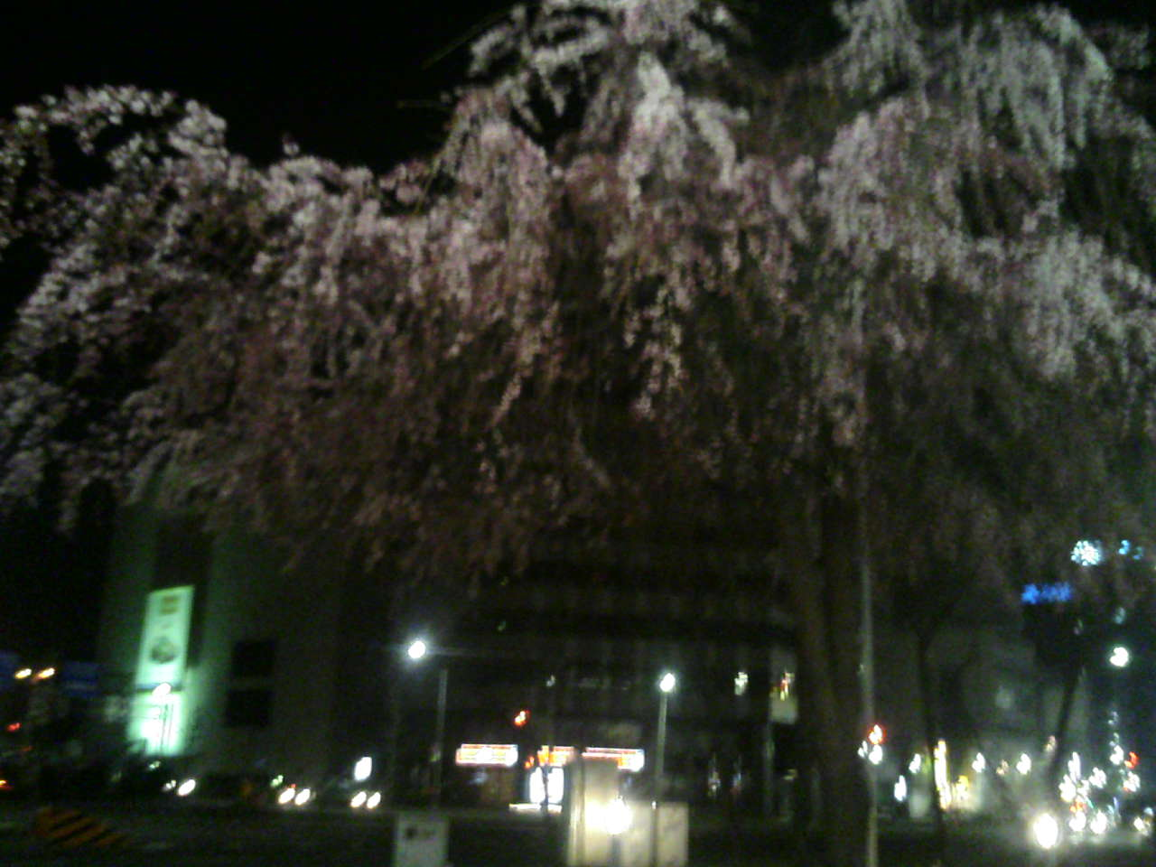 広小路葵の桜_e0013944_2229100.jpg