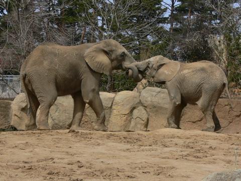 休日、動物園にて_e0084756_2323457.jpg