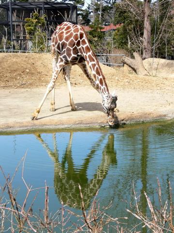 休日、動物園にて_e0084756_2328893.jpg