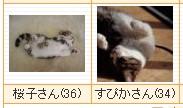 a0032384_20114534.jpg