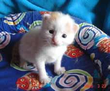 ターキッシュバン・子猫もうすぐ3週目_e0033609_21414469.jpg