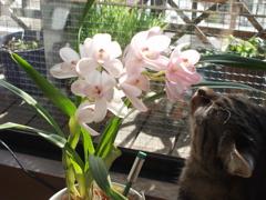 春はもうすぐだねぃ_e0065433_23313726.jpg