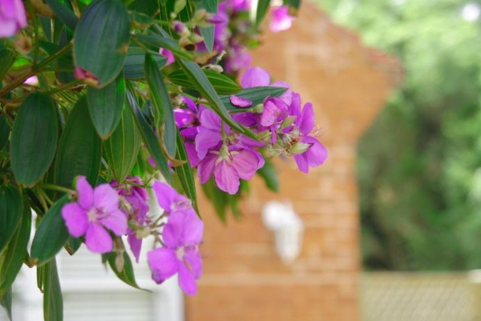 気になる花をRAWで撮ってみた_f0084337_19344810.jpg