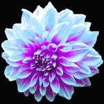 d0061338_144072.jpg