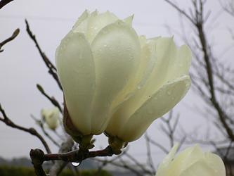 白い花 06-5_c0069048_6484671.jpg