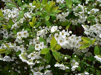 白い花 06-5_c0069048_649180.jpg