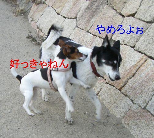 f0053952_12372162.jpg