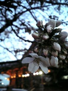 春の足音_b0020862_2232037.jpg