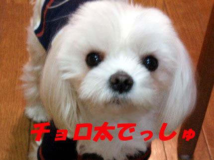 b0060071_02461.jpg