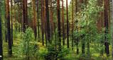 ヨーロッパの森林_a0051128_7342861.jpg