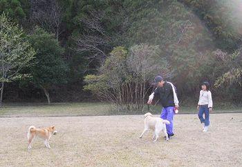 2006年3月24日桜の開花_f0060461_19431518.jpg
