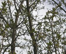 ヤツガシラ、アカメなど植えたが一抹の不安が:06・3・24_c0014967_1875348.jpg