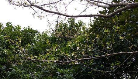 ヤツガシラ、アカメなど植えたが一抹の不安が:06・3・24_c0014967_1881321.jpg