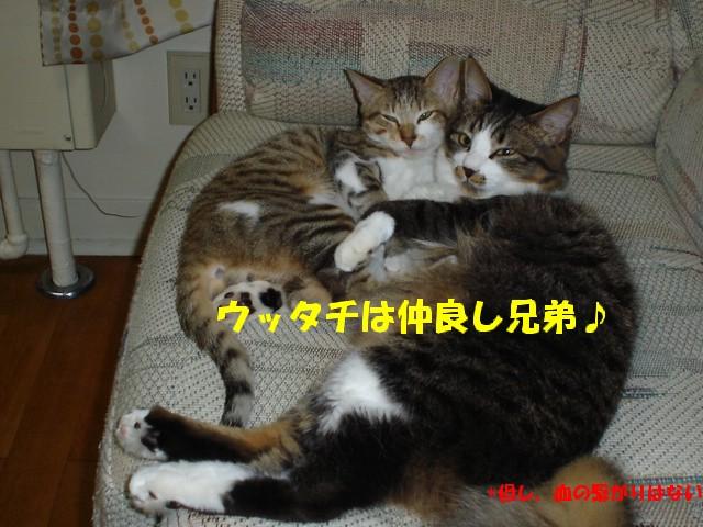 a0047874_1945147.jpg
