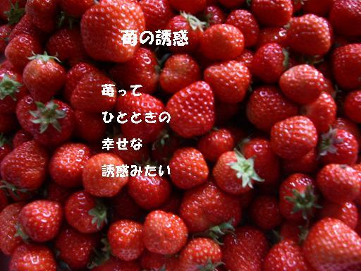 a0023210_1042745.jpg