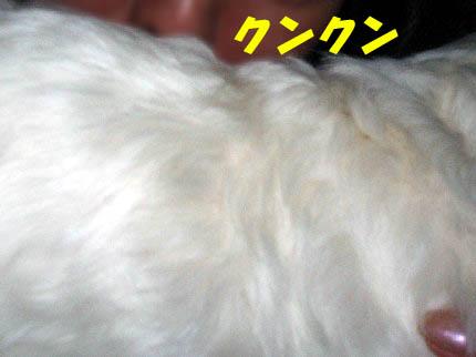 b0060071_123673.jpg