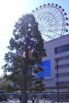 駅前のシンボルツリー_d0030373_15505937.jpg