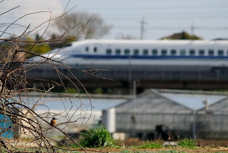 新幹線とカワセミ_b0024798_16351348.jpg