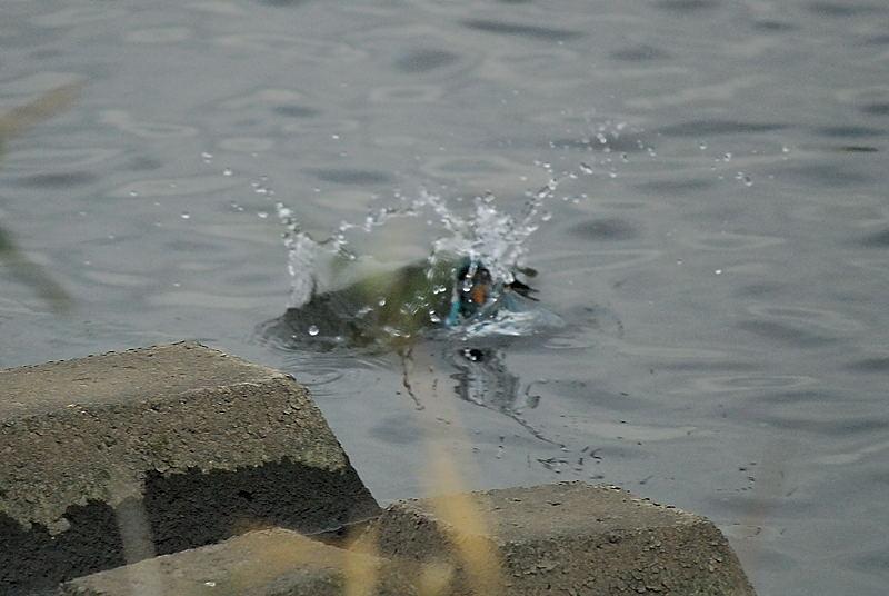 カワちゃんの水浴び_b0024798_208282.jpg