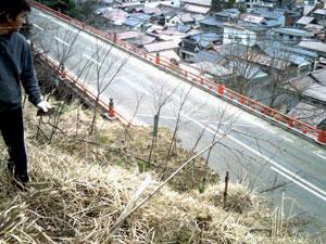 ♪桜を植えましょ 山中に~♪_a0041925_2335123.jpg