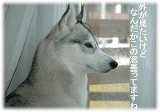 a0047325_15463298.jpg