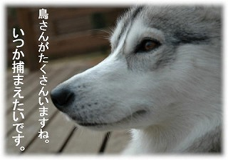 a0047325_1548123.jpg