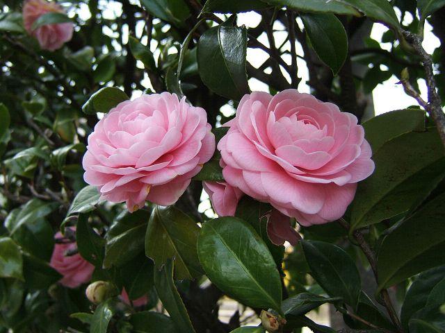花とりどり_e0089232_1449399.jpg