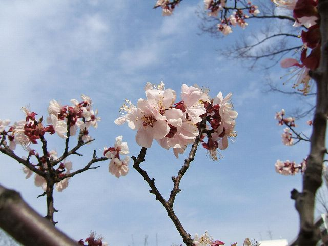 花とりどり_e0089232_14501772.jpg