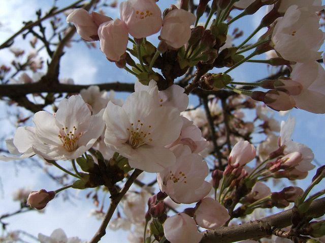 花とりどり_e0089232_1450255.jpg