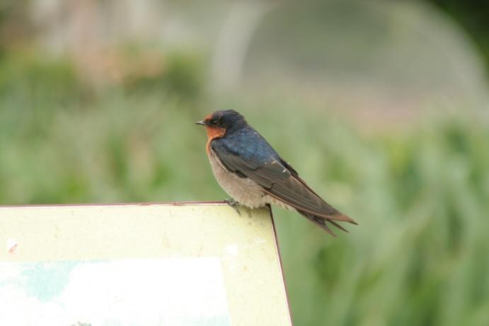 名もない鳥_f0084337_21425450.jpg