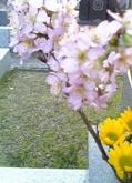 d0038294_22414913.jpg