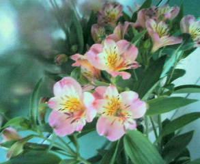 桜も咲く頃になると_c0024018_15154355.jpg