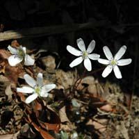 西郷村の春はもうすぐ_b0038919_10193863.jpg