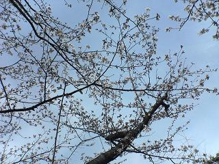 花の下にて_d0066127_20294188.jpg