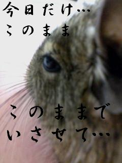 f0068932_1202877.jpg