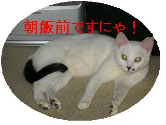 e0085147_034683.jpg